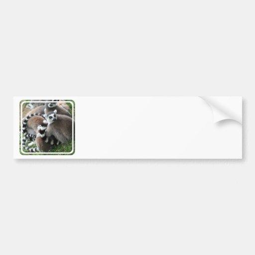 Ring Tailed Lemurs Bumper Sticker