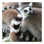Ring Tailed Lemurs Invitations