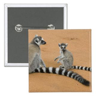Ring-tailed Lemurs, (Lemur catta), Berenty Buttons