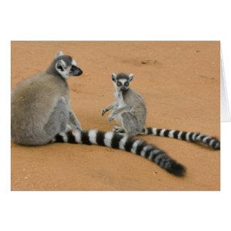Ring-tailed Lemurs, (Lemur catta), Berenty Card