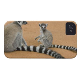 Ring-tailed Lemurs, (Lemur catta), Berenty Case-Mate iPhone 4 Case