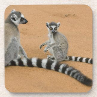 Ring-tailed Lemurs, (Lemur catta), Berenty Drink Coaster