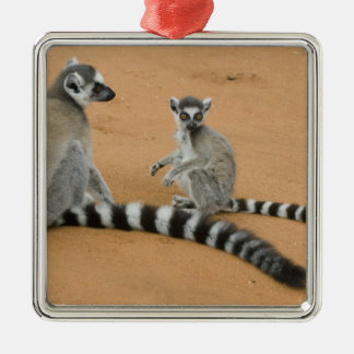 Ring-tailed Lemurs, (Lemur catta), Berenty Metal Ornament