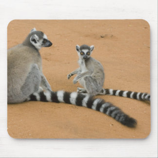 Ring-tailed Lemurs, (Lemur catta), Berenty Mouse Pad