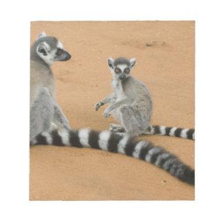 Ring-tailed Lemurs, (Lemur catta), Berenty Note Pad