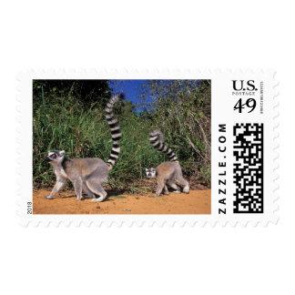 Ring-Tailed Lemurs (Lemur Catta), Berenty Postage