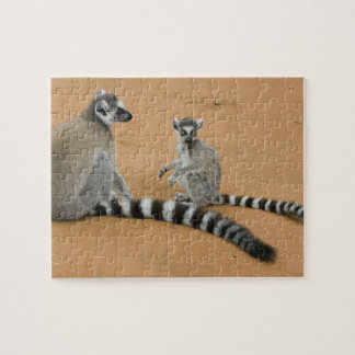 Ring-tailed Lemurs, (Lemur catta), Berenty Puzzle