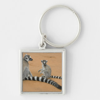 Ring-tailed Lemurs, (Lemur catta), Berenty Silver-Colored Square Keychain