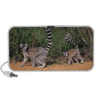 Ring-Tailed Lemurs (Lemur Catta), Berenty Portable Speaker