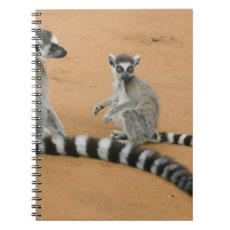 Ring-tailed Lemurs, (Lemur catta), Berenty Spiral Notebook