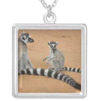 Ring-tailed Lemurs, (Lemur catta), Berenty Square Pendant Necklace