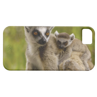 Ring-tailed lemurs (Lemur catta) Mother & baby. iPhone SE/5/5s Case