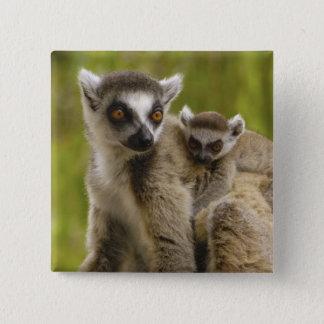 Ring-tailed lemurs (Lemur catta) Mother & baby. Pinback Button