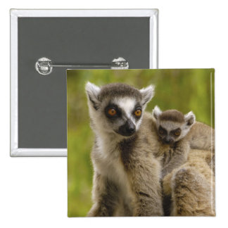 Ring-tailed lemurs (Lemur catta) Mother & baby. Pinback Button