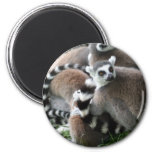 Ring Tailed Lemurs Magnet Refrigerator Magnets