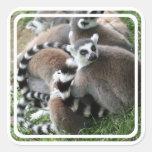 Ring Tailed Lemurs Sticker