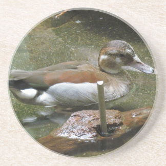 Ringed Teal Duck Coaster