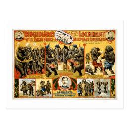 Ringling Bros Pachyderms 1899 Vintage Elephants Postcard