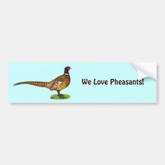 Ringneck Pheasant Rooster Bumper Stickers