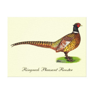 Ringneck Pheasant Rooster Canvas Print
