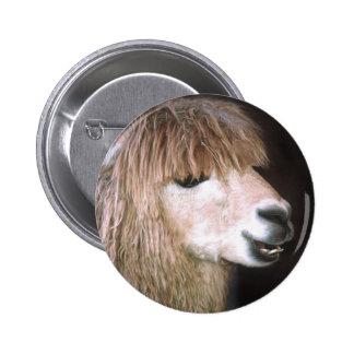 Ringo el botón de la alpaca pins