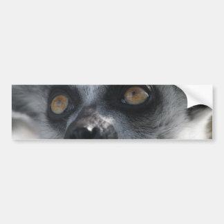 Ringtail Lemur  Bumper Sticker