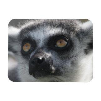 Ringtail Lemur Magnet Flexible Magnets