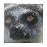 Ringtail Lemur Tile
