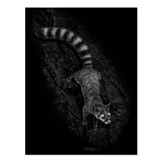Ringtail Post Cards