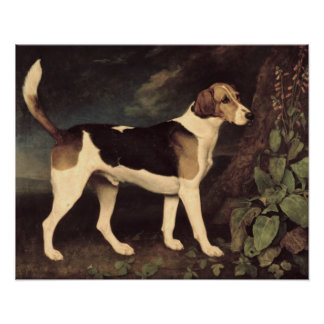 Ringwood, a Brocklesby Foxhound, 1792 Poster