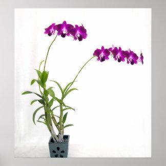 Rinnapa Dendrobium Orchid Plant Poster