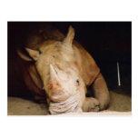 rinoceronte azul postales