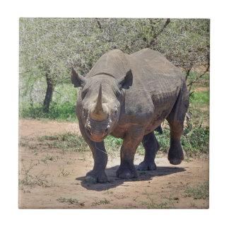 Rinoceronte Azulejo Cuadrado Pequeño