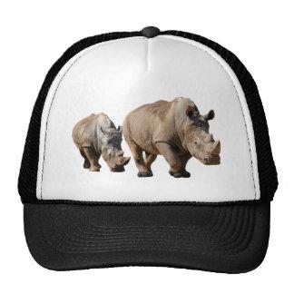 Rinoceronte blanco aislado dos gorros