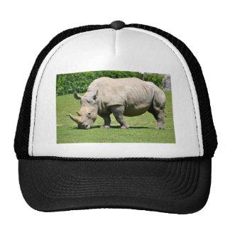Rinoceronte blanco que pasta la hierba gorro