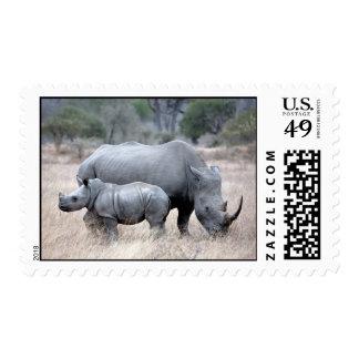Rinoceronte blanco franqueo