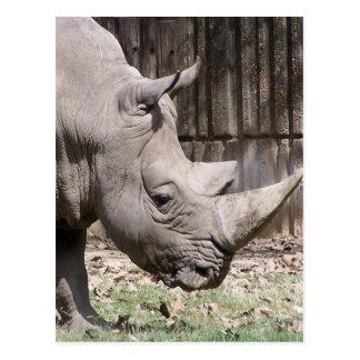 rinoceronte blanco postales