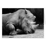 Rinoceronte blanco y negro tarjetas