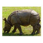 Rinoceronte del bebé postal