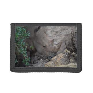 rinoceronte en la selva animal África del árbol y