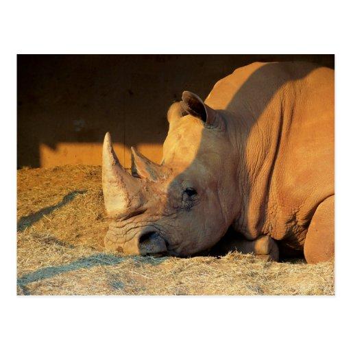 Rinoceronte en puesta del sol postal