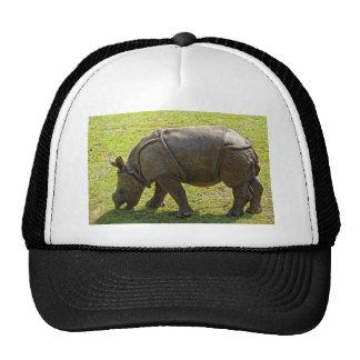 Rinoceronte Gorras