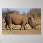 Rinoceronte Impresiones