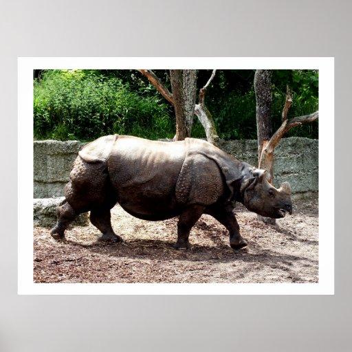 Rinoceronte indio impresiones