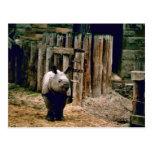 Rinoceronte indio postal