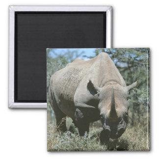 Rinoceronte majestuoso imán cuadrado