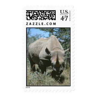Rinoceronte majestuoso sellos