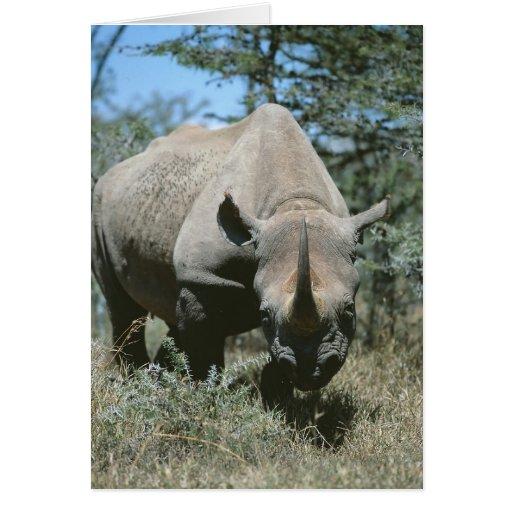 Rinoceronte majestuoso tarjeta de felicitación
