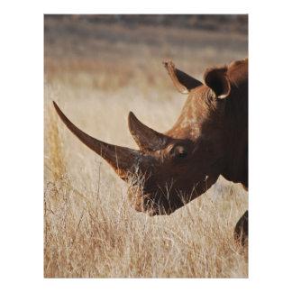Rinoceronte negro africano con los cuernos grandes tarjetón