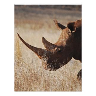 Rinoceronte negro africano con los cuernos grandes membretes personalizados